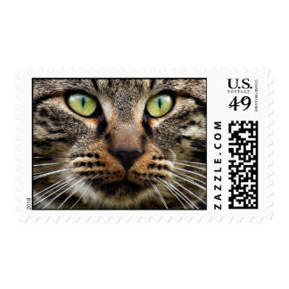 Stray Cat Stare Postage
