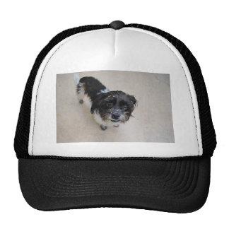 Stray Dog Trucker Hat
