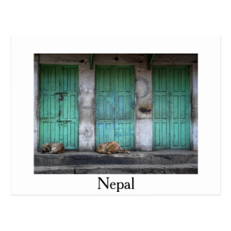 Stray dogs in front green doors white postcard