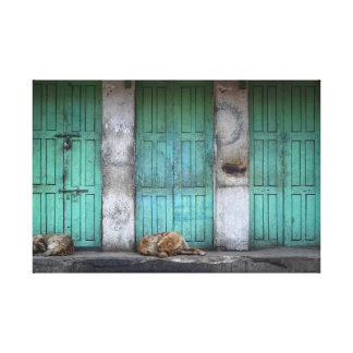Stray dogs in front of dirty green doors canvas