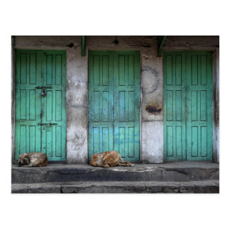 Stray dogs in front of dirty green doors postcard