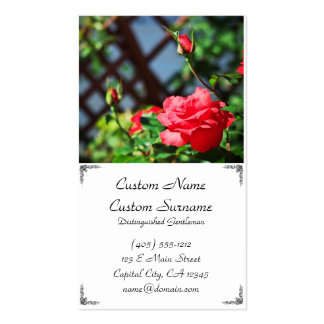 Stray Rose macro photography flower shoot business Business Card