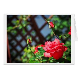 Stray Rose macro photography flower shoot Card