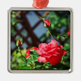 Stray Rose macro photography flower shoot Metal Ornament