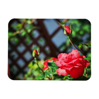 Stray Rose macro photography flower shoot Rectangular Photo Magnet