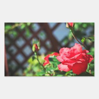Stray Rose macro photography flower shoot Rectangular Sticker