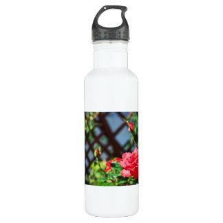 Stray Rose macro photography flower shoot Water Bottle