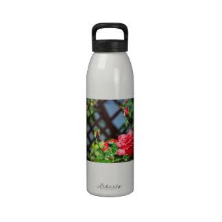 Stray Rose macro photography flower shoot Drinking Bottles