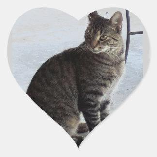 Stray Striped Cat Wants Love Photograph Heart Sticker