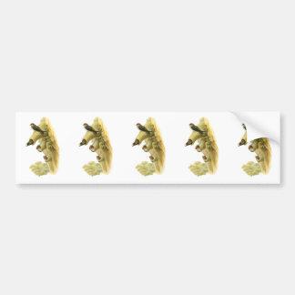 Streaked-throated Swallow Bumper Sticker