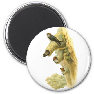 Streaked-throated Swallow Refrigerator Magnet
