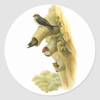 Streaked-throated Swallow Round Stickers