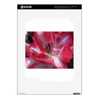 Streaked tulips with droplets in spring iPad 3 decals