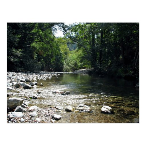 Stream flowing through trees postcard