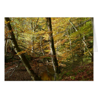 """""""Stream in Northumberland Woods"""" Card"""