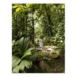 stream in rainforest, Dominica Postcard