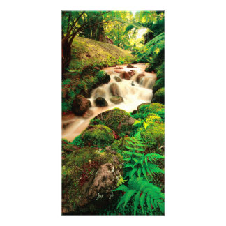 Stream in the forest card
