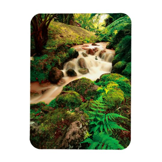 Stream in the forest magnet