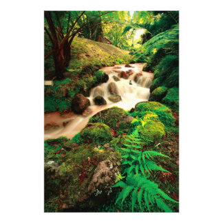 Stream in the forest photo print