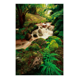Stream in the forest posters