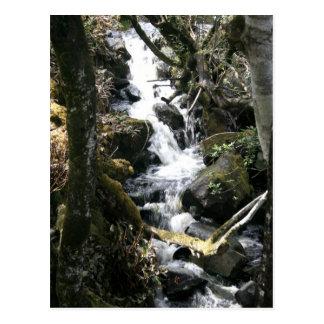 Stream, Southern Ireland Postcard