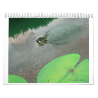 Stream with Turtles and Fish Calendar