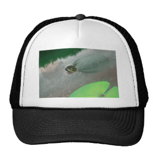 Stream with Turtles and Fish Mesh Hats