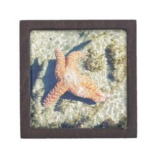 Streaming Starfish Gift Box