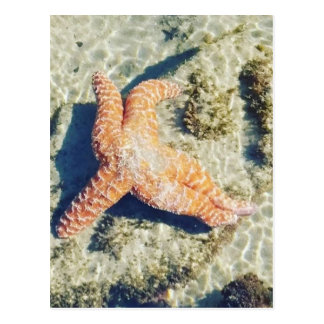 Streaming Starfish Postcard