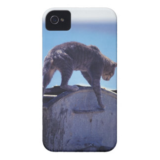 street cat Case-Mate iPhone 4 case