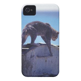 street cat Case-Mate iPhone 4 case