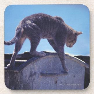 street cat coasters