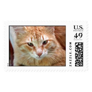Street Cat - Ginger Tom Postage Stamp
