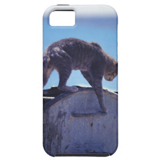street cat iPhone 5 cases