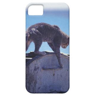 street cat iPhone SE/5/5s case