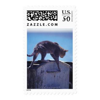 street cat postage