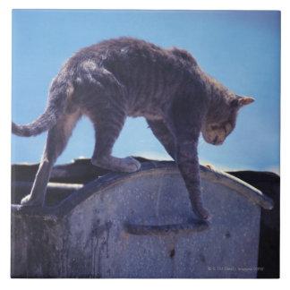 street cat tile