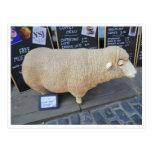 Street Sheep Postcard