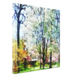 Street With White Flowering Trees Stretched Canvas Prints