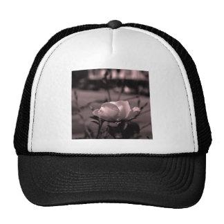 Streetalicious subió el gorra