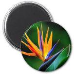 Strelitzia. Bird of paradise flower. Refrigerator Magnets