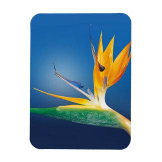 Strelitzia. Bird of paradise flower. Magnet