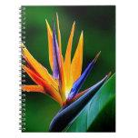 Strelitzia. Bird of paradise flower. Note Books
