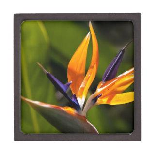 Strelitzia. Bird of paradise flower. Premium Trinket Box