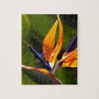 Strelitzia. Flor de la ave del paraíso Rompecabeza Con Fotos