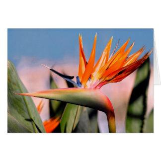 Strelitzia flower card