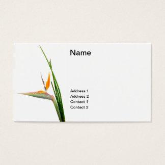 Strelitzia Reginae and reed Business Card
