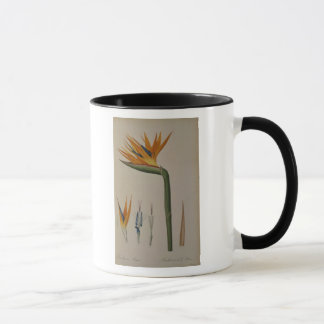 Strelitzia Reginae, from 'Les Strelitziacees' Mug