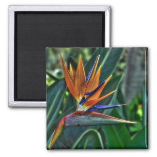 Strelitzia - Tenerife Flower 2 Inch Square Magnet