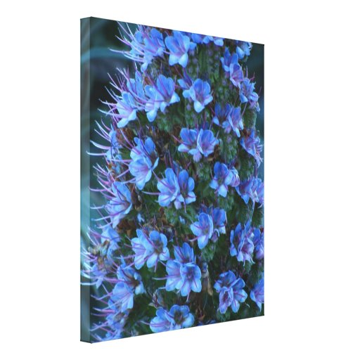 Stretched Canvas Print - Blue Lily Of The Nile